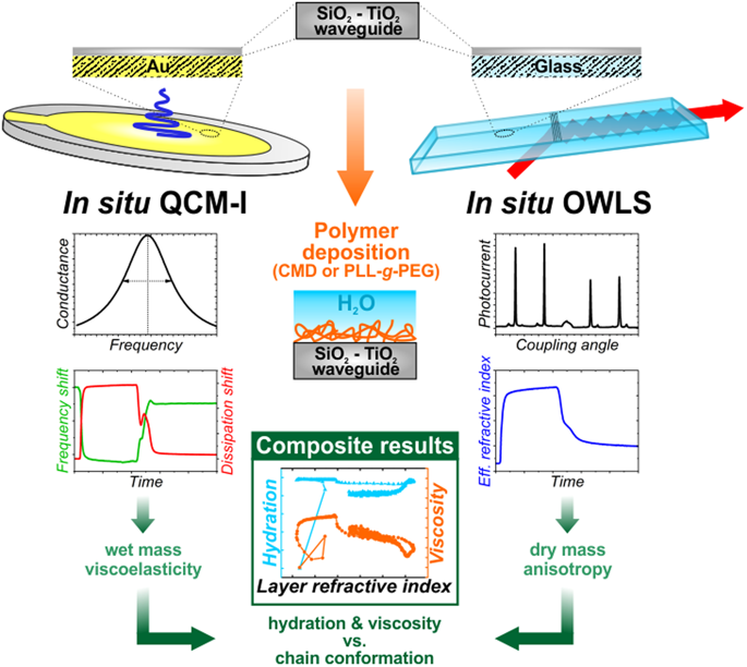In situ viscoelastic properties and chain conformations of heavily hydrated carboxymethyl dextran layers