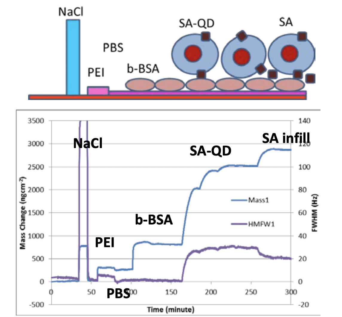 The Measurement of Protein and Nano-Particle Adsorption using QCM-I - Figure 1